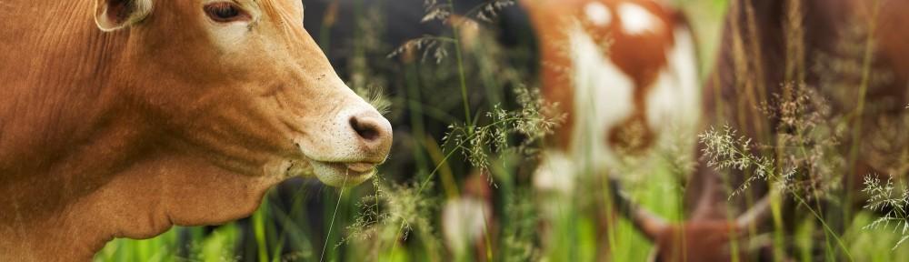 Βοοτροφία - Αιγοπροβατοτροφία